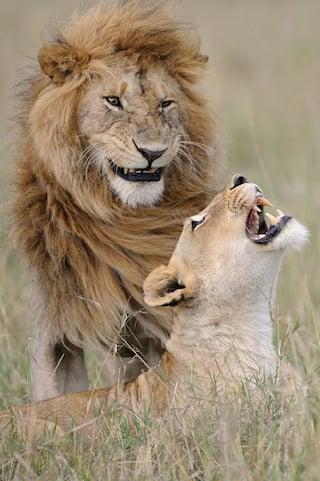 أجمل صور مضحكة للحيوانات تم تصويرها لحن الحياة