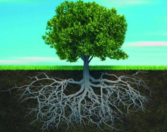قوة تحمل جذع الأشجار بفضل الشكل الدائري